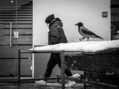 (Miran Kramar) Tags: street winter snow bird olympus zagreb streetphoto crow raven em1 1235