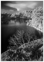 2. stampe, Baneheia, Kristiansand (Georg Engh) Tags: infrared infrard baneheia landscapesshotinportraitformat
