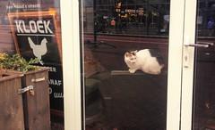 Kloek Kat (indigo_jones) Tags: door holland window netherlands cat reflections restaurant kat utrecht nederland kip poes raam vredenburg horeca shopcat kloek