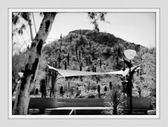 a view from a patio, b&w (milomingo) Tags: arizona cactus blackandwhite bw plant southwest nature phoenix monochrome garden desert hill border patio frame saguaro sonoran arid desertbotanicalgarden