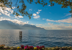 framing lake Lausanne... (dtapkir) Tags: trees winter sky mountain lake snow mountains flower color water leaves sunshine clouds landscape switzerland waves serene nikond750