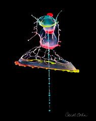 _MG_6557-Fiesta-Splash (Carol Cohn) Tags: macro droplets waterdrop splash liquid waterart fluiddynamics highspeedphotography liquidart liquidsculpture splashart shootfrombelow
