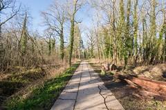 The Right Path (Evoljo) Tags: park uk blue trees sky nikon path swindon wiltshire stantonpark d7100