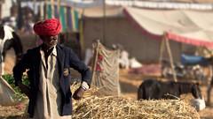 Pushkar-20151121-08.41.14 - 03490-Edit-4 (Swaranjeet) Tags: november portrait people india indian ethnic pushkar rajasthan mela rajasthani 2015 camelfair animalfair
