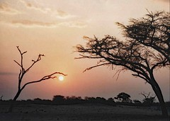 Afican Sunset (john atte kiln) Tags: africa trees sun bush peace branches silhouettes twigs protecting cradling