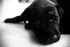(Karlla Ferreira Diagramao & Fotografia) Tags: cute dogs animals babydogs