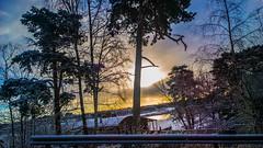 WP_20160318_07_36_03_Raw__highres (madeinfin) Tags: trees pine sunrise finland helsinki kulosaari