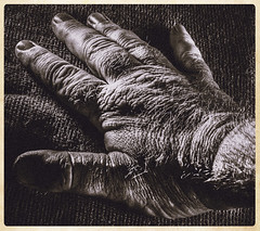 Textured Hand (IAN GARDNER PHOTOGRAPHY) Tags: stilllife texture hand fingers human bodypart