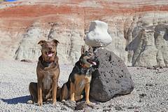 Biff, Frikka and the Alien Being, Bentonite Hills, Utah (Bob Palin) Tags: usa dog animal rock 510fav canon lava utah outdoor hiking biff australianshepherd bentonite waynecounty catahoula 100vistas instantfave canonef24105mmf4lisusm bentonitehills ashotadayorso frikka orig:file=2016032005746