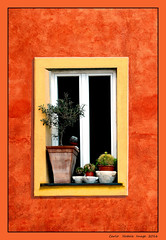 Olive tree at the window (cienne45) Tags: tree window olive cienne45 carlonatale finestra natale camogli olivetree alberoallafinestra