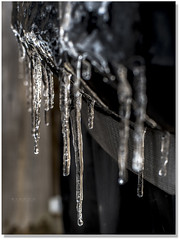 Drip Drop (Sigpho) Tags: winter ice nice nikon sigpho