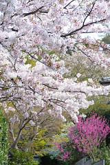 20160410-DSC_7117.jpg (d3_plus) Tags: sky plant flower history nature japan trekking walking temple nikon scenery shrine bokeh hiking kamakura fine daily bloom  28105mmf3545d nikkor    kanagawa   shintoshrine   buddhisttemple dailyphoto sanctuary   thesedays kitakamakura  28105   fineday   28105mm  holyplace historicmonuments  zoomlense ancientcity        28105mmf3545 d700 281053545 nikond700  aiafzoomnikkor28105mmf3545d 28105mmf3545af aiafnikkor28105mmf3545d