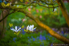 Come Forth (James Neeley) Tags: flower london nature spring hydepark jamesneeley