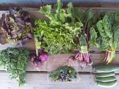 Suzie's CSA Box, Week of April 18 - 24