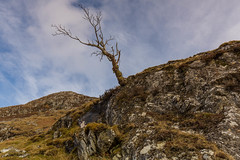 The Loner. (Gordie Broon.) Tags: silhouette clouds landscape geotagged scotland spring scenery alba bare scenic paisaje escocia hills april remote paysage caledonia lonetree schottland ecosse collines invernessshire scozia 2016 scottishhighlands heuvels whitebridge monadhliathmountains lochkillin gordiebroonphotography garragielodge killinlodge canon5dmklll canon1635f4l amharcanach