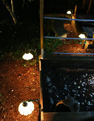 IMG_7783 (jalexartis) Tags: lighting nightphotography sun night dark outdoors aquarium outdoor aquatic basking aquatichabitat ybst yellowbelliedsliderturtles outdoorhabitat