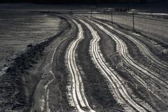 Sci da fondo (kmclaudio) Tags: ski neve pista fondo paesaggio sci stmoritz scia allaperto pentaxart