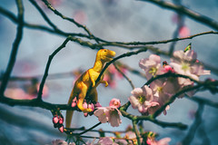 Spring, at last ! (Laurence Vagner) Tags: spring dino dinosaur printemps plumblossoms toyphotography