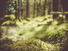 Mossy Wood (i-r-paulus) Tags: trees green forest woodland moss dof bokeh sunny dartmoor mossy cosmicar cosmicartelevisionlens