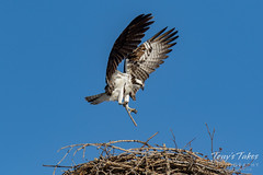 Osprey returns from Home Depot sequence - 12 of 27