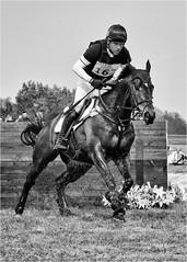 Burnham Market International Horse Trials - 14 (Sylviane Moss) Tags: bw horse sport noiretblanc action equestrian moochrome silverefex burnhammarketinternationalhorsetrials2016