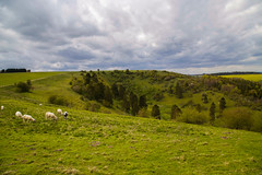 White Hill (Peter Tappern) Tags: trees green grass clouds scenery sheep hollow rapeseed