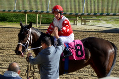 "2016-01-03 (25) r2 Charles Lopez on #8 Eight Da Hardway (JLeeFleenor) Tags: photos photography md laurelpark marylandhorseracing winter jockey جُوكِي ""赛马骑师"" jinete ""競馬騎手"" dżokej jocheu คนขี่ม้าแข่ง jóquei žokej kilparatsastaja rennreiter fantino ""경마 기수"" жокей jokey người horses thoroughbreds equine equestrian cheval cavalo cavallo cavall caballo pferd paard perd hevonen hest hestur cal kon konj beygir capall ceffyl cuddy yarraman faras alogo soos kuda uma pfeerd koin حصان кон 马 häst άλογο סוס घोड़ा 馬 koń лошадь winner maryland"