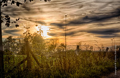 Autumn (Lucien Schilling) Tags: autumn automne herbst luxembourg lu sanem soleuvre zolwer