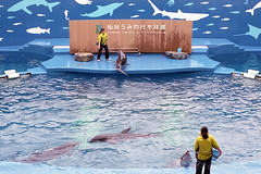 20160227-18 (GenJapan1986) Tags: film japan aquarium  miyagi  2016     nikonnewfm2 fujifilmfujicolorsuperiaxtra400