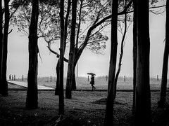 ... das de lluvia y luz!!! / ... days of rain and light!!! (Fede Falces ( ...... )) Tags: trees light blackandwhite bw beach nature girl lines rain silhouette forest umbrella way seaside woods flickr path days serene melancholy cinematic noireetblanc