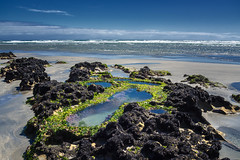 Rock pools (loveexploring) Tags: sea newzealand seascape beach landscape sand wave pacificocean limestone southisland tasmansea westcoast rockpool bivalve sealettuce ulvalactuca xenostrobuspulex littleblackmussel paturaubeach