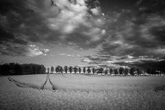 Northington Sky