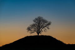 King of the hill (jarnasen) Tags: morning copyright tree nature field grass silhouette composition sunrise landscape dawn early nikon sweden outdoor tripod hill perspective sverige scandinavia tamron linkping telezoom stergtland d810 sttuna nordiclandscape 150600mm tamronsp150600mm jarnasen