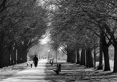 Midway Plaisance (Toagdu) Tags: park parque bw usa chicago tree monochrome bn trail rbol hydepark universityofchicago eeuu monocromtico