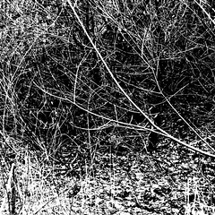 about becoming and passing away (vertblu) Tags: winter bw snow abstract nature contrast mono snowy abstraction twigs abstrakt thicket abstractnature 500x500 baretwigs contrastenhanced natureabstracted vertblu contrastenhancing
