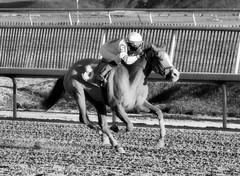 2016-01-03 (107) r9 Caitlyn Stoddard on #5 Tough Weather (JLeeFleenor) Tags: horses bw monochrome caballo cheval photography blackwhite md photos uma maryland cal jockey chestnut jinete cavallo cavalo pferd equestrian kuda alogo equine hest thoroughbreds soos hevonen cuddy paard cavall kon koin laurelpark  jokey fantino hst ceffyl  jquei  ko faras hestur  perd femaleathletes ngi  konj    capall beygir yarraman dokej femalejockey rennreiter  pfeerd marylandhorseracing marylandracing   okej kilparatsastaja jocheu