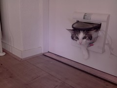 20160429-145919-i-1 (Catflap central) Tags: camera pet cats cat pi raspberry meow catdoor catflap kattenluik katzenklappe catflapj2nnl