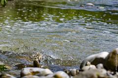 Pesa (maxis965) Tags: fiume movimento sassi acqua ruscello vita