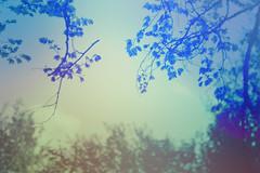 blur-dreamy-texture-texturepalace-80 (texturepalace) Tags: blur color leaves cc creativecommons dreamtextures texturepalace blurtextures