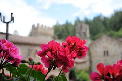 Castello di Amorosa (Susan L Pettitt Photography) Tags: california ca travel nikon explore napavalley napa castello winecountry d300 nikonphotography travelcalifornia castellodiamorosa nikond300 explorecalifornia