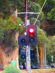 Single Green Cyclist-Activated Signal - Fitzroy Tce/Jeffcott Rd/Park Tce/Torrens Rd intersection, Fitzroy (RS 1990) Tags: bike lights cyclist traffic fitzroy january pedestrian led signals adelaide friday southaustralia aldridge northadelaide 29th 2016 braums parktce torrensrd fitzroytce jeffcottrd