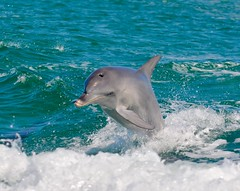 image (Stuart Lilley Photography) Tags: mammal dolphin wildlife dolphins mammals