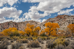 Southern Utah Fall Colors (Jeffrey Sullivan) Tags: travel trees red copyright fall jeff monument nature colors leaves yellow rock digital canon landscape photography rebel utah photo october sandstone bureau outdoor conservation grand roadtrip southern management national staircase cottonwood land lands sullivan exploration escalante 2007 blm bureauoflandmanagement xti wwwjeffsullivanphotographycom seeblm blmproud