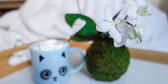 Petite Planet Valentine's 2016 (petiteplanet) Tags: plant orchid flower floral rose moss valentine gift kokedama