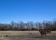 Daily Scene (SoonerChick14) Tags: blue donkey scene potd cy365