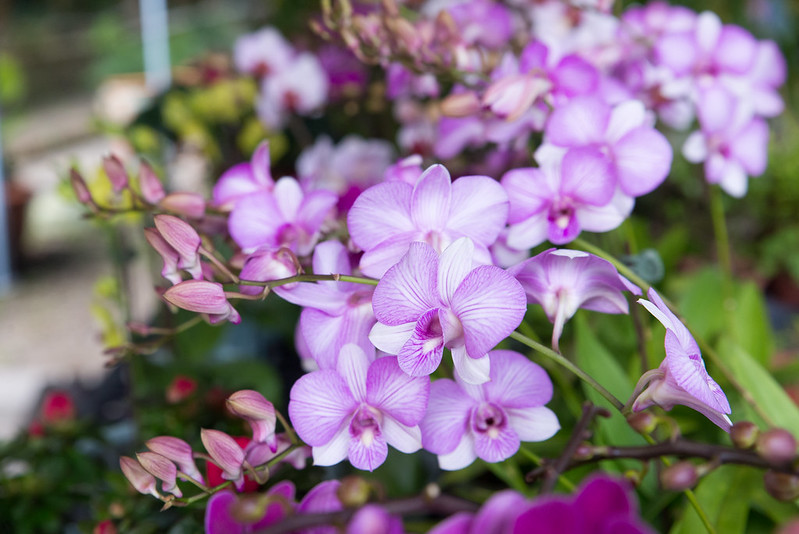 高雄六龜麗麗花間