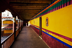 Yellow wall at Hemis Monastery in Ladakh (Anoop Negi) Tags: travel india yellow wall photography photo buddhist buddhism monastery anoop ladakh negi hemis ezee123 drukpa