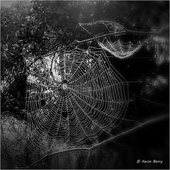 Spiderwebs at sunrise (Kevin B Photo) Tags: morning sunlight nature square blackwhite natural native handheld backlit spiderwebs iphone kevinbarry evergladesnationalparkflorida