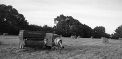 Hay making at Coopers farm