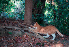 Cat Stretch (SekcMainlander) Tags: cute animal japan forest cat day outdoor stretch wilderness